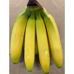 Bananes bio - au Kg