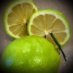 Citron verts bio - la paire...