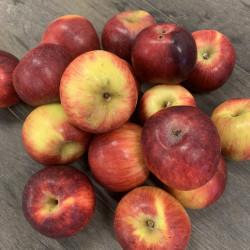 Pommes - Kg