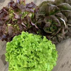 Salade - pièce